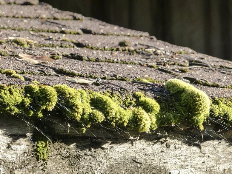 Does Homeowner's Insurance Cover Roof Leaks? - Gotcha ...