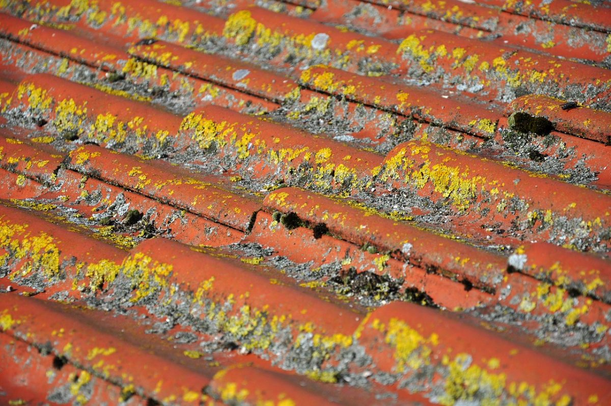 Algae On Roof